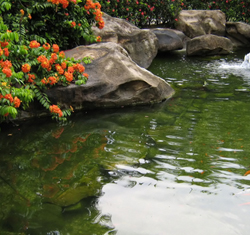 Natural stone for koi ponds